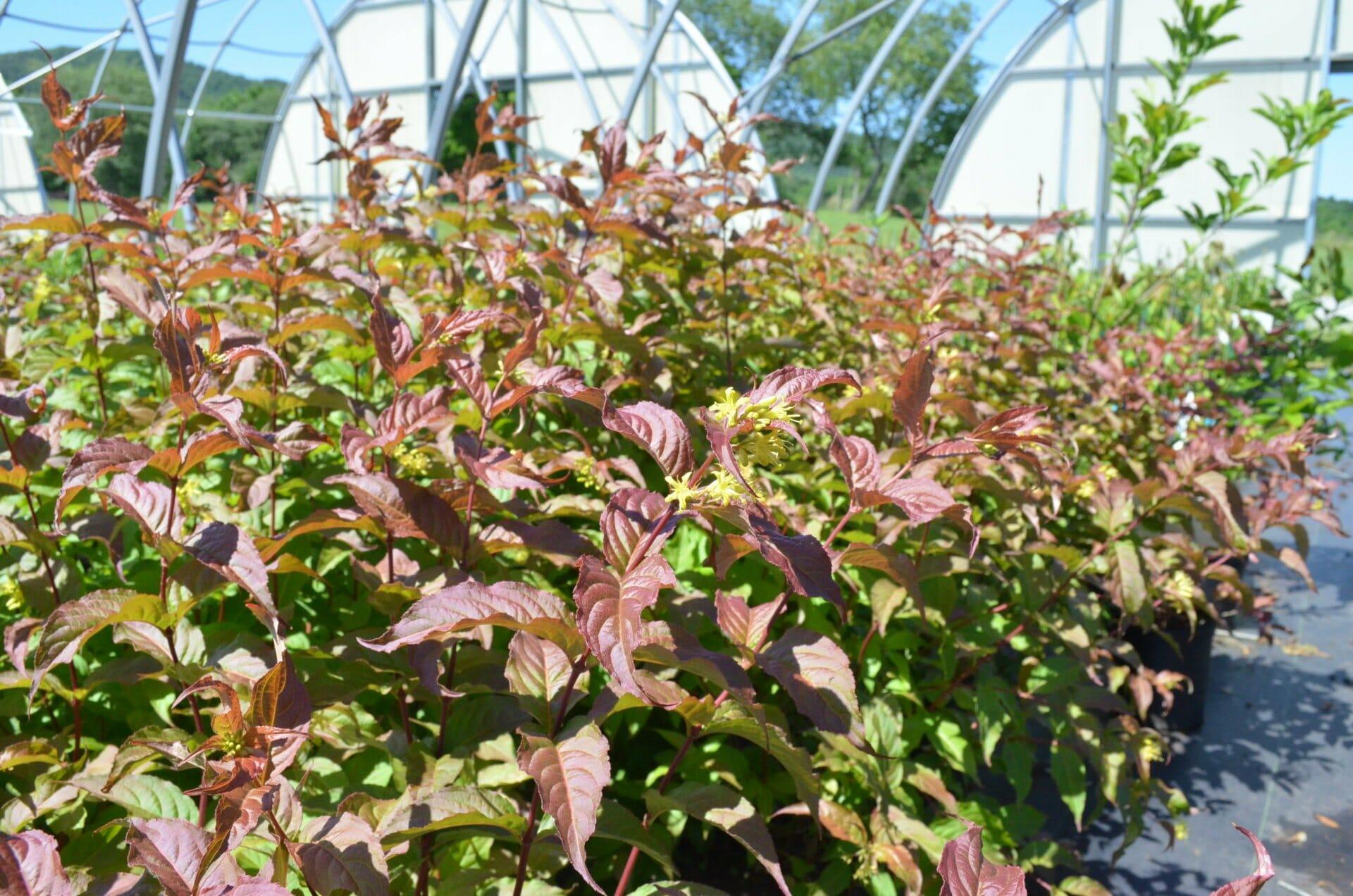 Quality Greenhouses & Perennial Farm Inc.